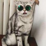 냥글라스 개글라스 미러 선글라스