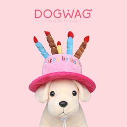 강아지 고양이 생일파티 모자