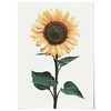 패브릭 포스터 F070 식물 꽃 해바라기 no.2 [중형]