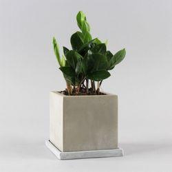 공기정화식물 고급모던컬러화분 FM 금전수