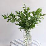 루스커스 잎 그린 인테리어 식물 생화