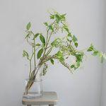 자리공 그린인테리어 식물 생화