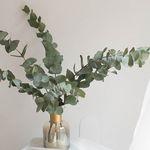 생화 유칼립투스 시네리아 인테리어 식물