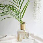 수입 아레카 야자 잎 3장 공기정화 식물