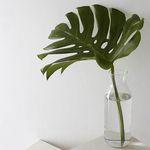 몬스테라 그린 인테리어 가습식물