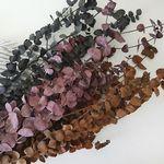 빈티지 컬러유카리 3color