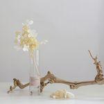 Autumn&Winter 나비수국 (preserved flower)