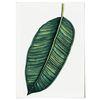 패브릭 포스터 F092 식물 그림 그린 터치 2 [중형]