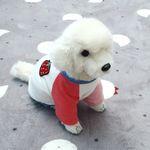 [펫딘]스트로우베리 래글런 강아지옷 티셔츠