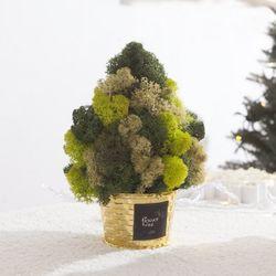 스칸디아트리화분 20cm MP (2색상) TRFAHM