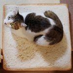 고양이 식빵 방석 디자인형 계란후라이(40x40)