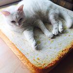 고양이 식빵 방석 디자인형 에스프레소(40x40)