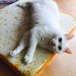 고양이 식빵 방석 디자인형 딸기(40x40)