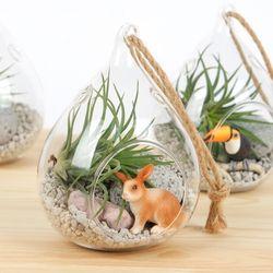 그린드롭(토끼) - 틸란드시아 테라리움