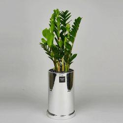 중형 공기정화식물 고급 로즈골드 실버 금전수