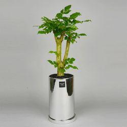 중형 공기정화식물 고급 로즈골드 실버 녹보수
