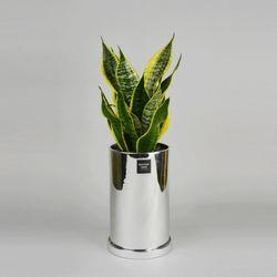 중형 공기정화식물 고급 로즈골드 실버 슈퍼바