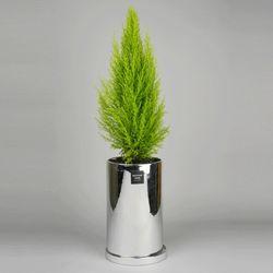 중형 공기정화식물 고급 로즈골드 실버 율마