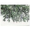 패브릭 포스터 F120 식물 나뭇잎 나무 그늘 B [중형]
