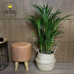 공기정화식물 아레카야자 + 해초바구니