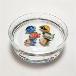 당근 투명유리수반+물고기모형6종