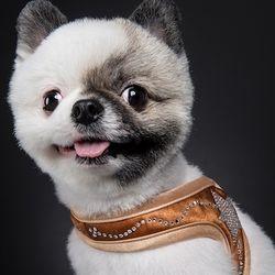 [핏독] fitdog - BlingBling Harness (Brown)
