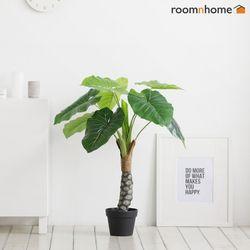 알로카시아조화나무