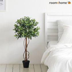 월계수조화나무
