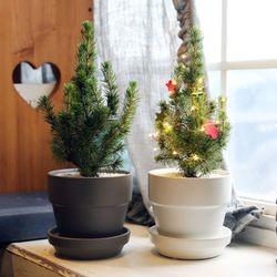 크리스마스트리 미니화분 코니카식물+모던세라믹팟