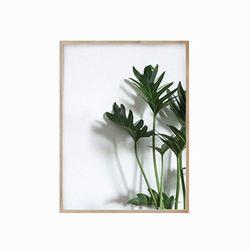 뉴보태닉 - 식물01 원목액자(16R)