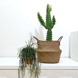 청화각 [무광화이트화분 완성품+천연초 바구니]