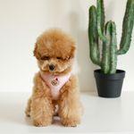 bebe custom harness(pink)