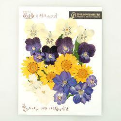 [압화 꽃모음 - A타입] 팬지마을 꽃모음
