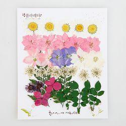 [압화 꽃모음 - B타입] 눈꽃레인보우 꽃모음