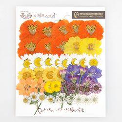 [압화 꽃모음 - C타입] 청실홍실 꽃모음