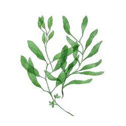 [DIY명화]Q3224스페이스 Leaf (잎) size 40x50cm