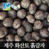 [푸른채] 제주 화산토 흙감자(대계란크기) 10kg