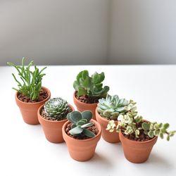 공기정화식물 다육이 미니화분 세트