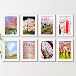 cw890-분홍빛벚꽃가득일본액자세트