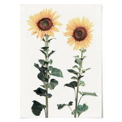 패브릭 포스터 F046 식물 꽃 그림 해바라기 [중형]