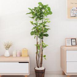 파비안 160cm 7-2 FREOFT(조화나무)