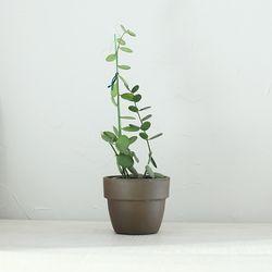 인테리어식물 녹태고