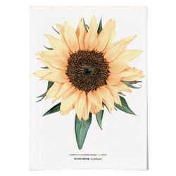 패브릭 포스터 F186 꽃 그림 해바라기 no.4 [중형]
