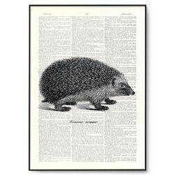 고슴도치 일러스트 동물 딕셔너리 아트A4  DA002