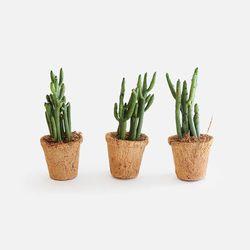 다육식물 유포르비아 알루아우디