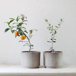 모던빈티지 중형 테라코타 오렌지나무 올리브나무