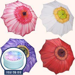 [3월의탄생화] 갤러리아 데이지 우산 (3단-장우산)
