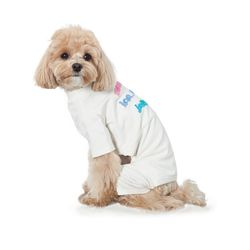 강아지 자수 올인원 Jelly c3