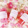 [무료배송] 사쿠라 코하쿠토 벚꽃 에디션