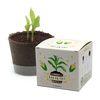 팜팜농장 - 옥수수 모종키우기